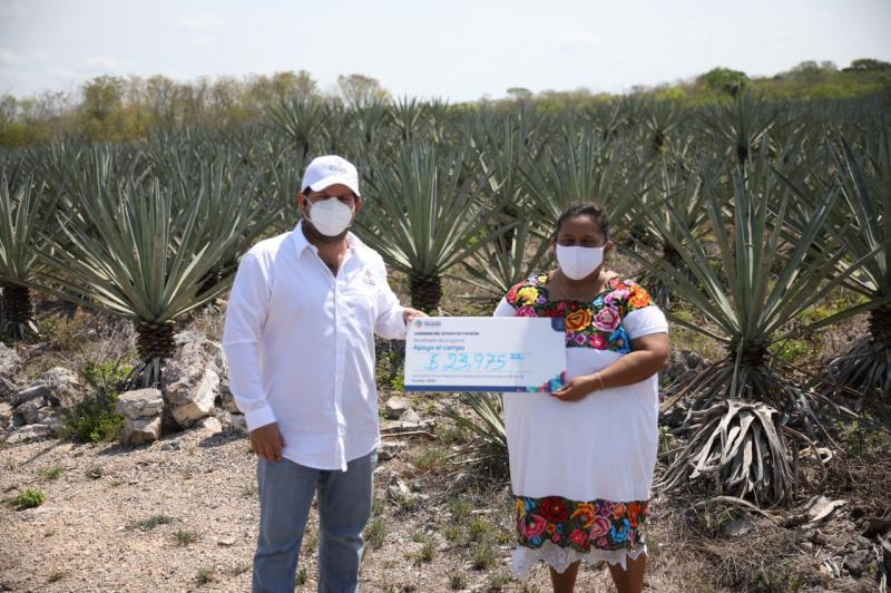 Gobierno del Estado otorga apoyos extraordinarios por 2.5 millones de pesos a productores henequeneros