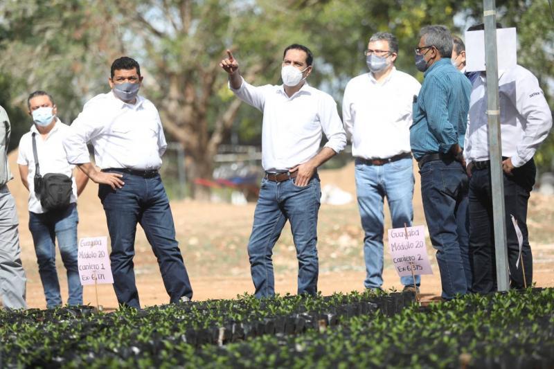 Junto con el Secretario del Bienestar del Gobierno de México, Javier May Rodríguez, Vila Dosal realizó un recorrido por el vivero que se habilitó el recinto ferial de X'matkuil.